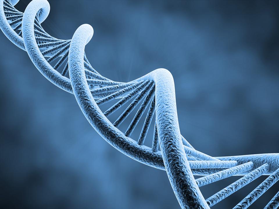 960-DNA-16977506